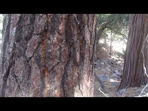 Old Footage: 12/23/18: Angeles National Forest- PCT East of Camp Glenwood