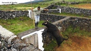JAF - Apartar Touros Freguesia Terra Chã - Ilha Terceira - Açores
