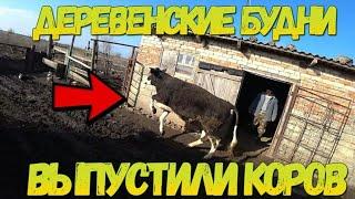 Ставропольский край - Наши деревенские будни / Сегодня выпускаем коров / Семья в деревне - наше ЛПХ
