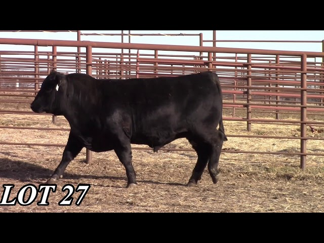 Mead Angus Farms Lot 27