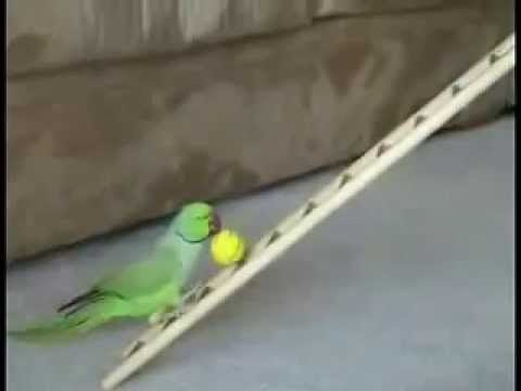 Funny Adorable Trained Parrot