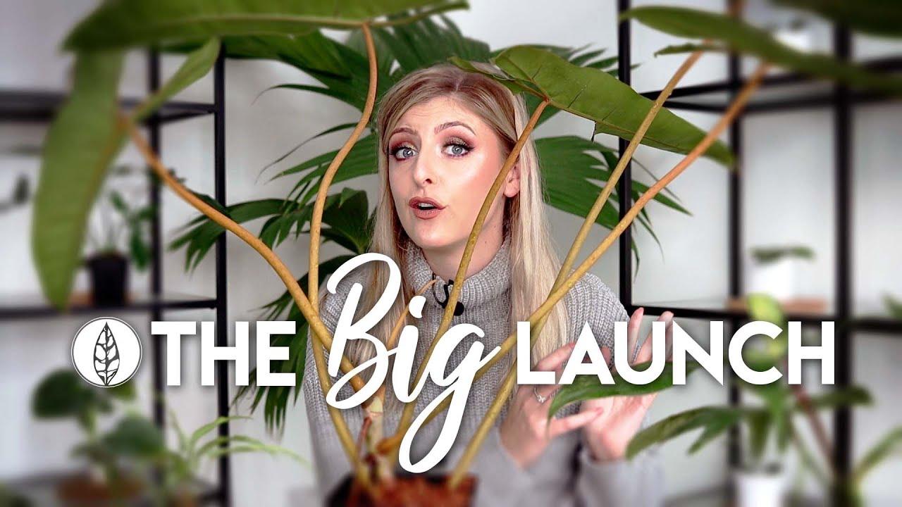 The Rare Plant Shop Launch! | Information & Plant Demo!