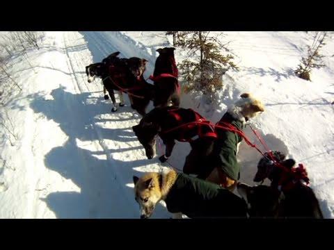 Part 2: Rookie crashes on Iditarod trail