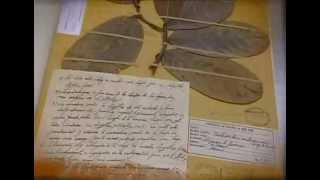 El Herbario de la Universidad Nacional, el más antiguo del país
