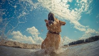 Golden Retriever Beach - Gopro Hero3 Black