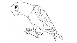 How to Draw a Parrot / Как нарисовать попугая