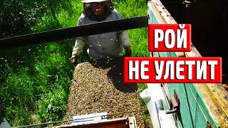 Роение пчел  КАК НЕ ДОПУСТИТЬ ВЫХОД РОЯ Искусственное роение
