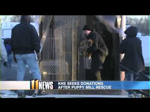 Ky. Humane Society seeks donations for dogs rescued from Pulaski Co.