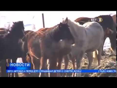 В Хайбуллинском районе Башкортостана пропало 60 лошадей