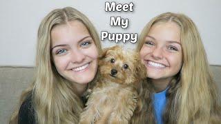 Meet My Puppy