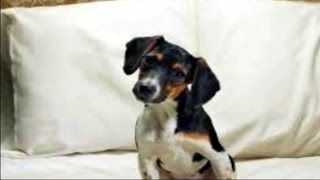 Lobo - Me And You And a Dog Named Boo (Lyrics) Legenda Inglês - Português