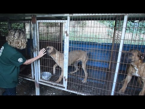 Life on a South Korea Dog Meat Farm