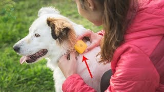 5 Best GPS Trackers For Children & Pets, Never Lose Sight Of What's Important