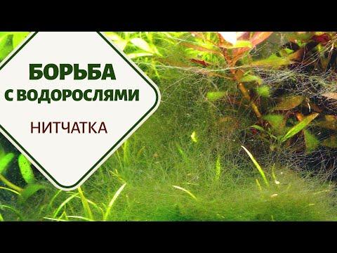 Борьба с водорослями. Часть 3. Нитчатка