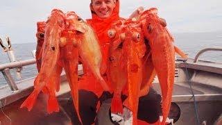 Морской окунь! Рыбалка в Норвегии!.