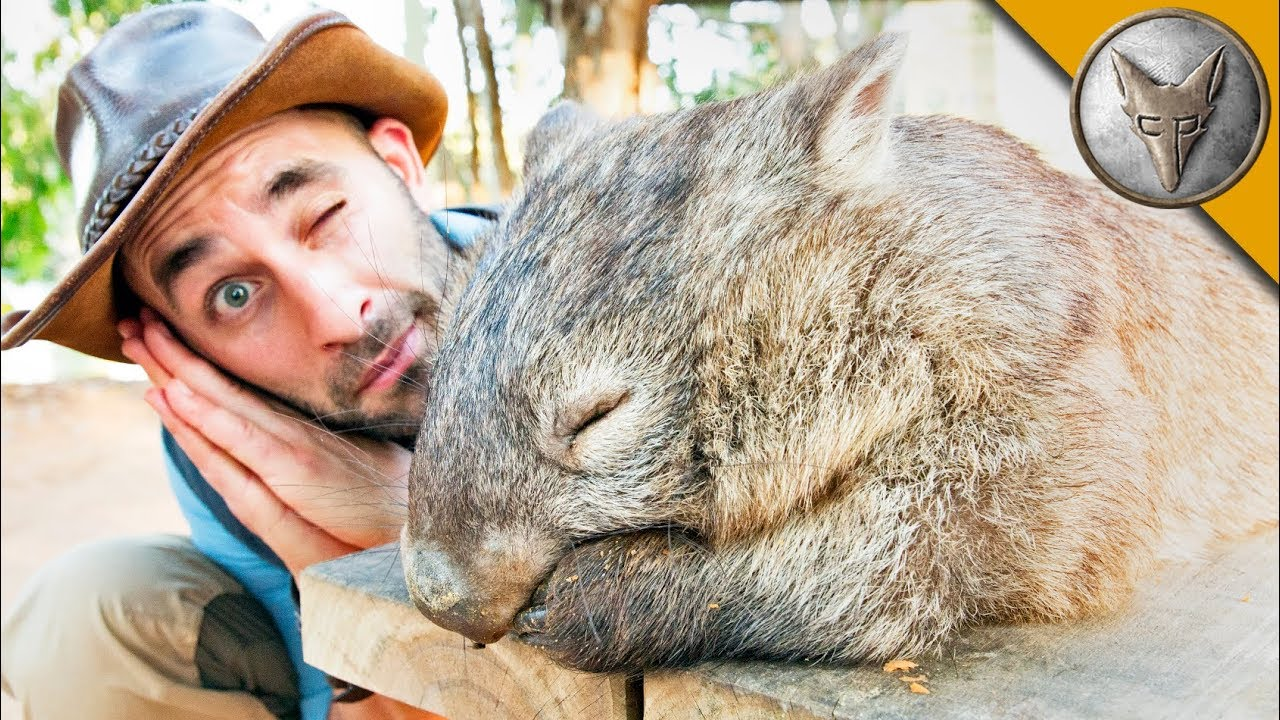 don-t-wake-the-wombat