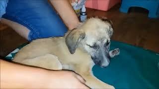 Спасение щенка из собачьего ящика