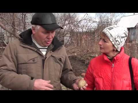 """Как выращивать картофель. Часть 3 Посадка и уход. Сайт """"Садовый мир"""""""