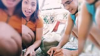 Planting Eggplant 101