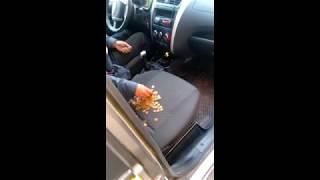 Водитель «Яндекс Такси» подрезал машину в Пензе