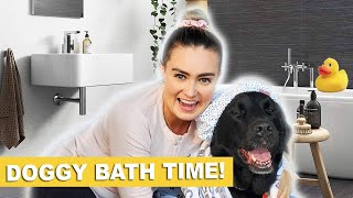 I Tried to Give My Guide Dog A Bath at Home! #stayhome #withme