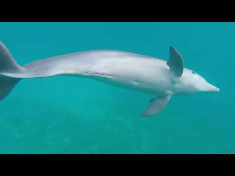 Up close and personal with Dolphins and Turtles in the British Virgin Islands