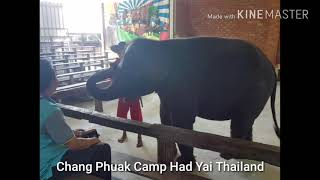 Chang Puak Camp Songkhla Thailand