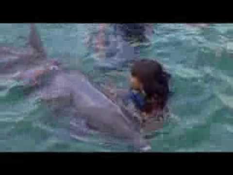 Nado con Delfines en Cancun, Playa del Carmen y Riviera Maya