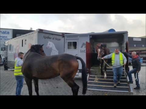 41 Pferde von Amsterdam bis Teheran  تهران Tehrān  Horses in container load