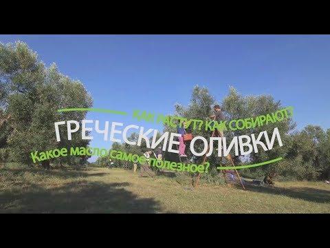 Оливки в Греции