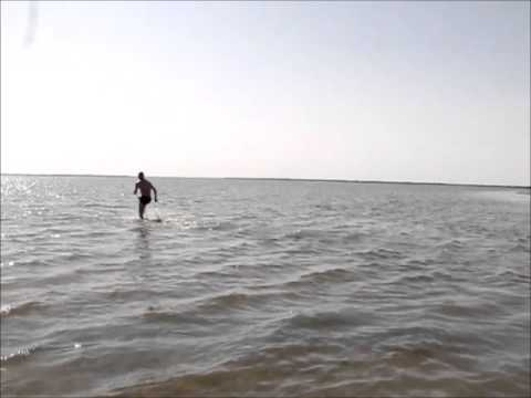 Swimming and running in the Aral Sea