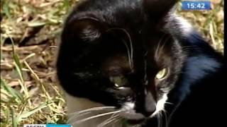 Кошки гибнут в подвалах иркутских домов