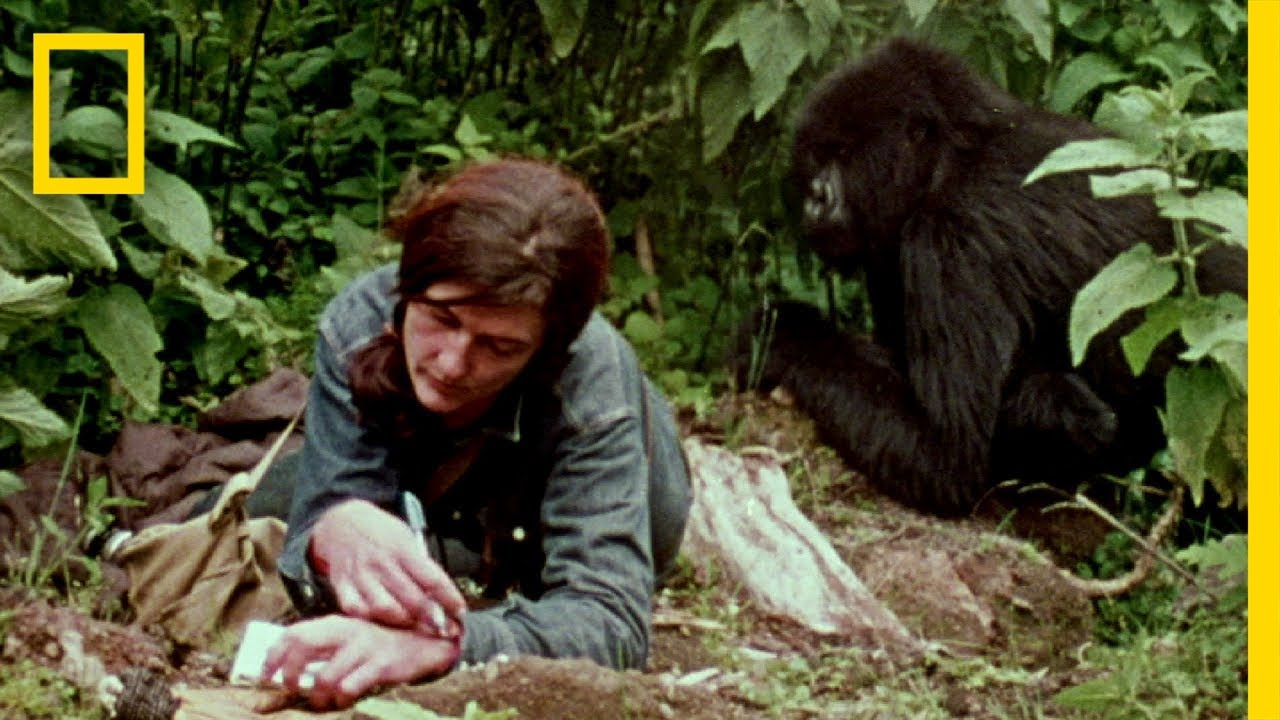 dian fossey life and death Dian fossey was a legendary figure in the wildlife conservation movement dian fossey: secrets in the mist is a serialized documentary that embarks on an astonishing journey to piece together fossey's controversial life and mysterious death.