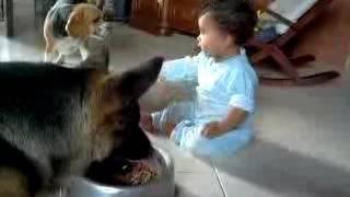 【関連動画】 人間の赤ちゃんを自分の子供のように思っている犬たち・必...