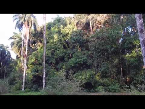 Sights and Sounds: Shelter Bay, Panama