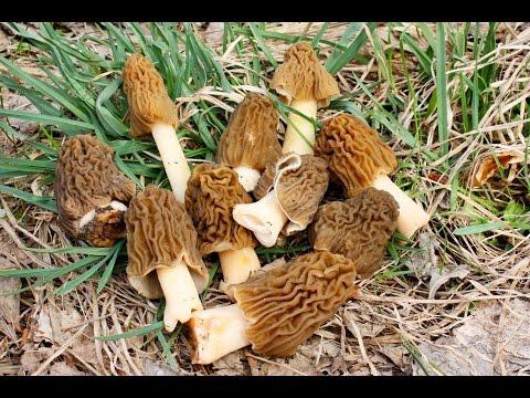 фото и видео сбора белых грибов