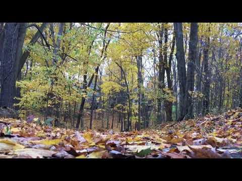 Reflexiones espirituales habladas - El Buscador espiritual
