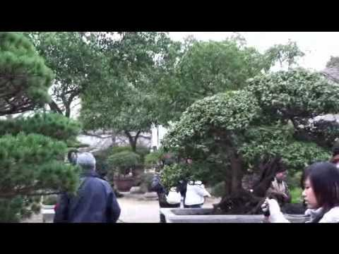 2010 China Bonsai Garden