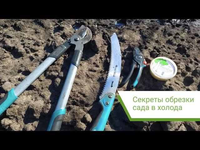 Как правильно обрезать сад «Центр промышленного ореховодства и виноградарства»