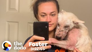 You Won't Believe How Pretty This Furless Puppy Gets | The Dodo Foster Diaries