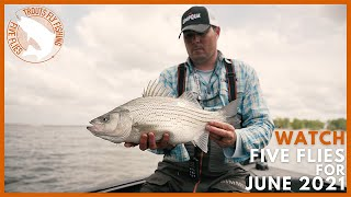 WATCH: Five Flies for June 2021   Warmwater Fly Fishing for Wiper, Smallmouth, Drum, & Walleye