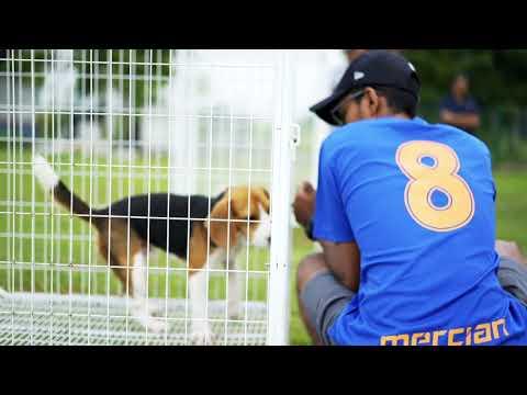 Achieving Balance Through Dogs - A Self Awareness Program by Malaysia Dog Training