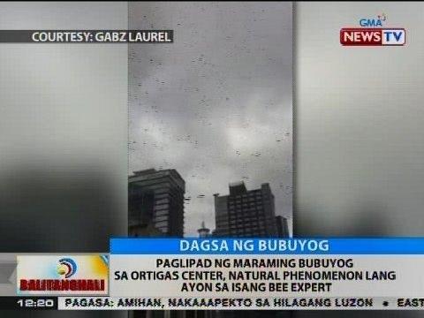 BT: Bee expert: Paglipad ng maraming bubuyog sa Ortigas Center, natural phenomenon lang