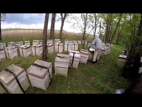 ПЧЕЛОВОДСТВО. Перевозка пчёл на белую акацию 8 мая.Вентиляция Bee-Box, самодельная 2016.