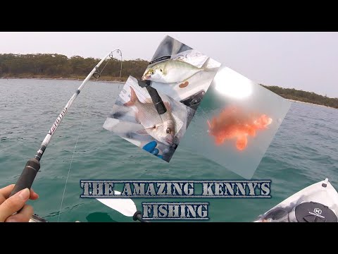 Insane Fishing In Jervis Bay