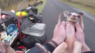 """KANGAROO ON MOTORCYCLE – Joey in ma pouch NO JOKE! """"rescue"""""""