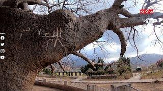 ماهو الاسم الاخر لشجرة الغريب ؟ | رحلة حظ 2