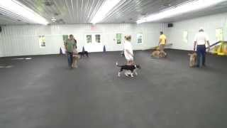 World Class Dog Kennels, Obedience Classes, Chicago Il.