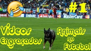 Vídeos Engraçados - Animais no futebol #1