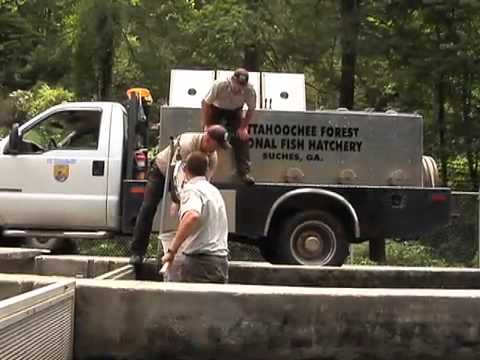 North Georgia Fish Hatchery Keeps State Waters Stocked